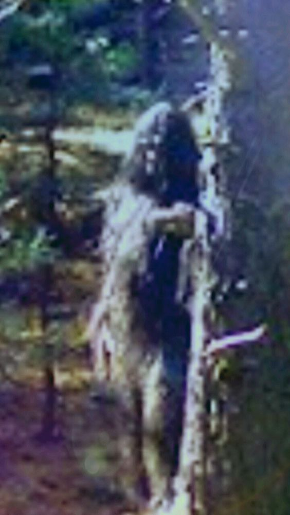 Old time photograph of a real Sasquatch of a bigfoot